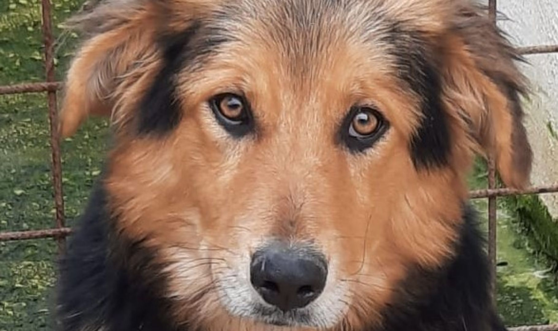 cane in cerca di adozione