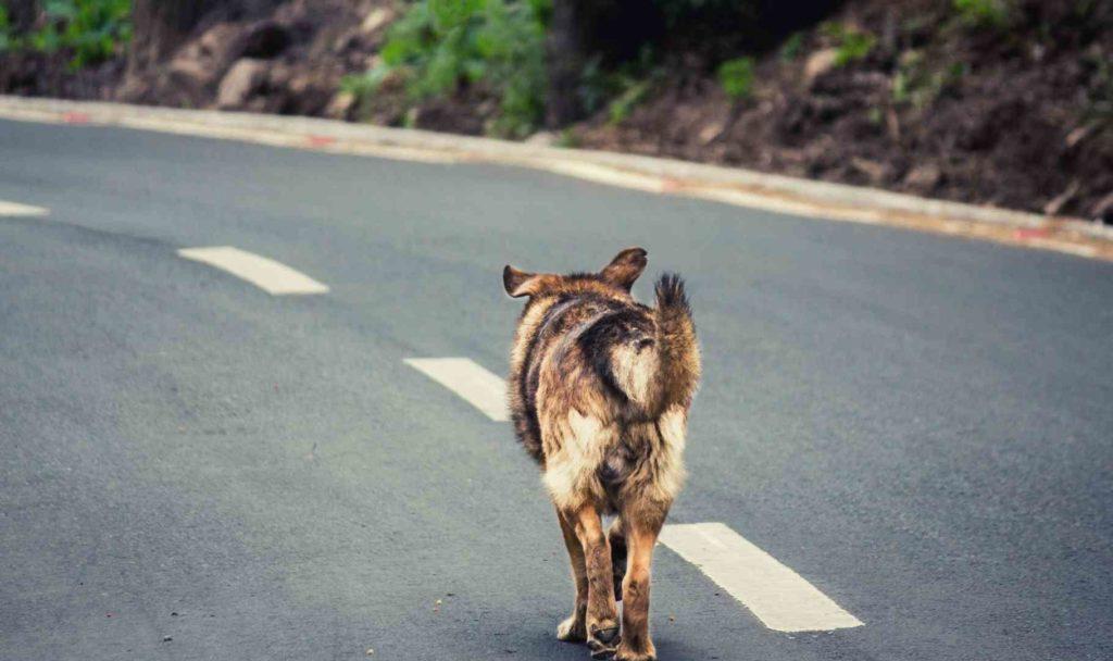 animali smarriti per strada