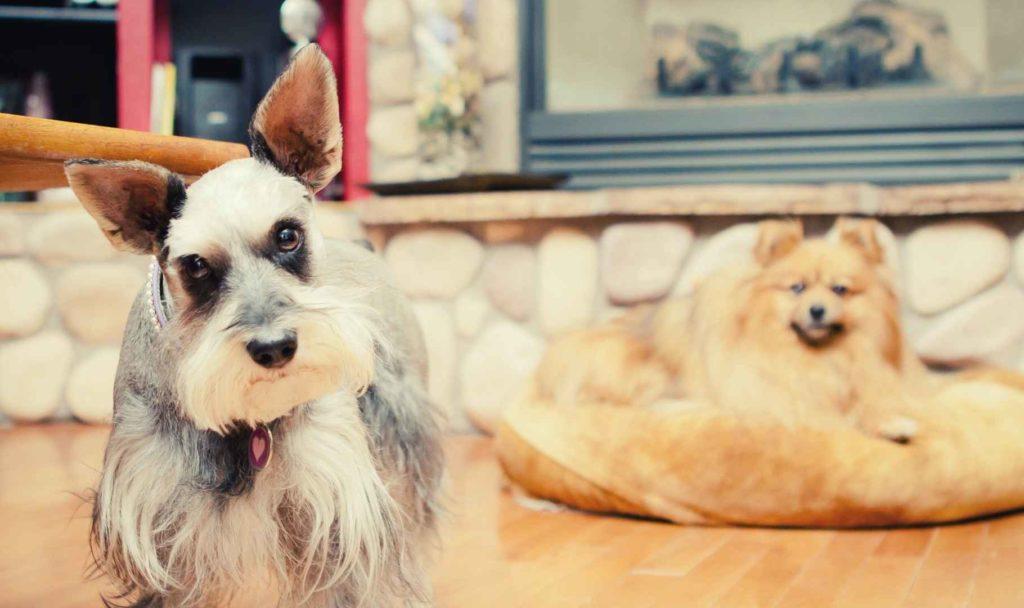 pensione casalinga per cani