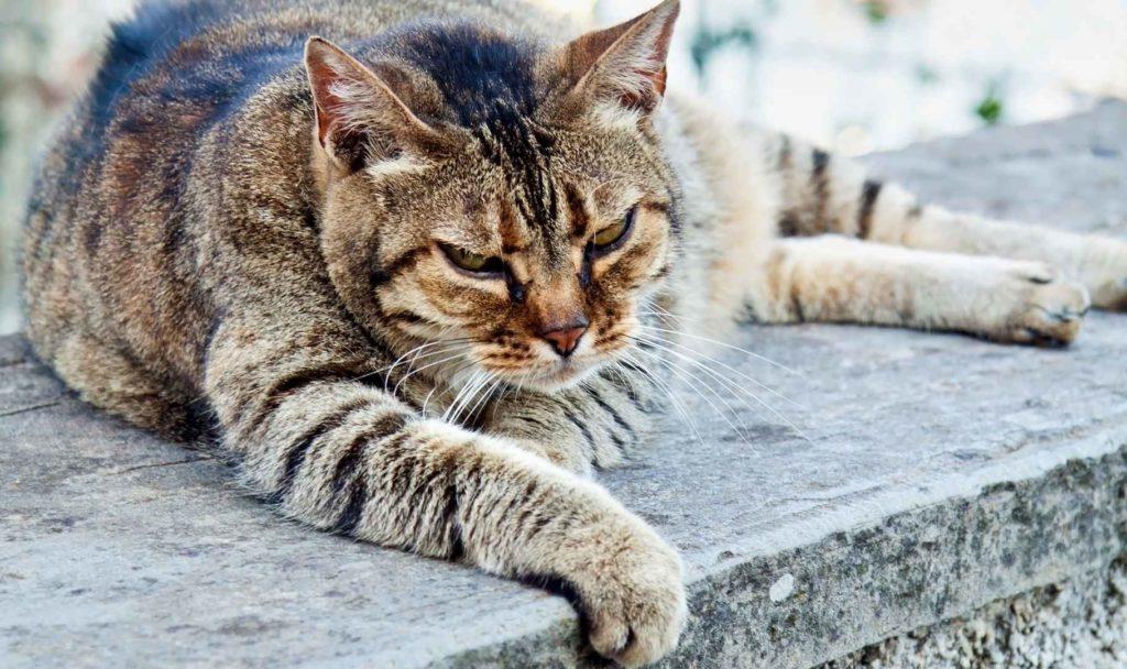 ricette per gatti anziani
