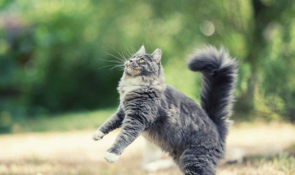 vaccino per il gatto