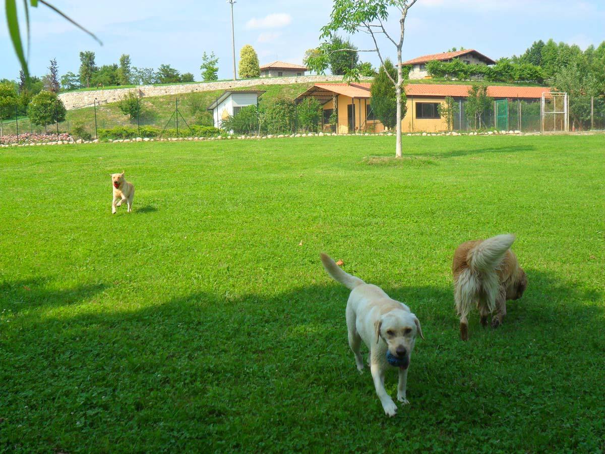 dog_resort_pensione_cani