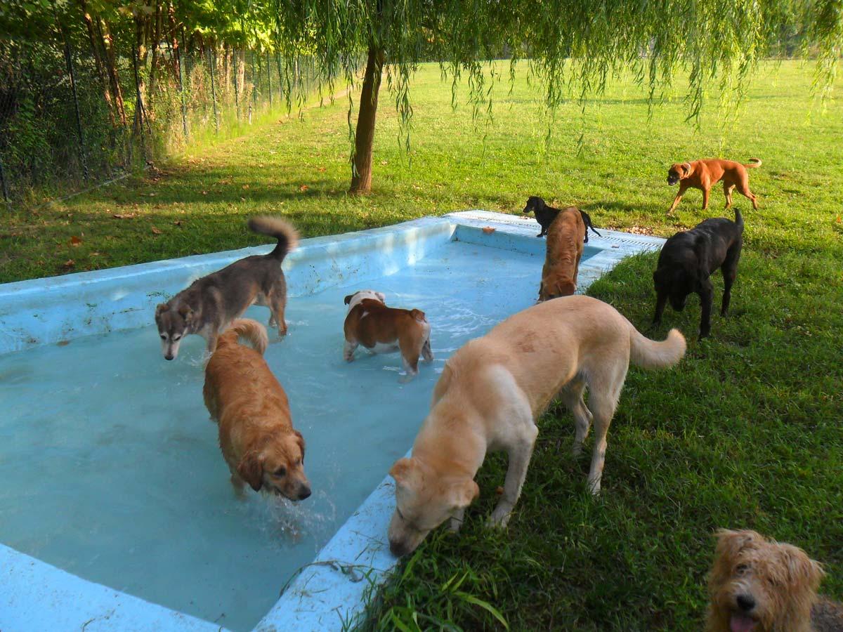 dog_resort_peschiera_piscina