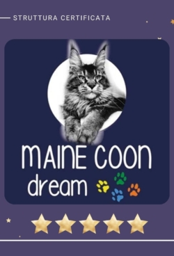 main_coon_dreamer