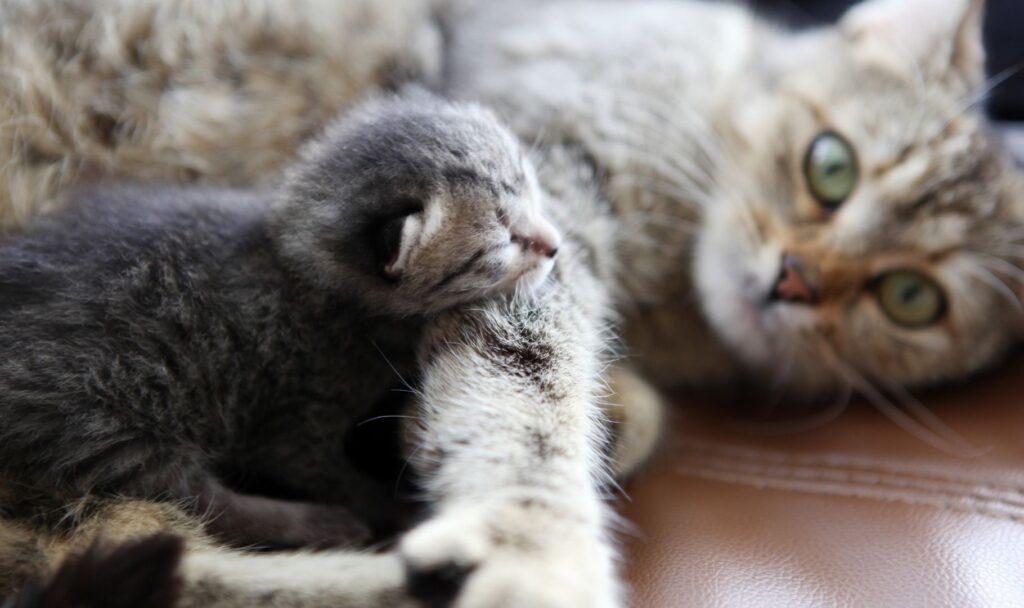 educare un gattino