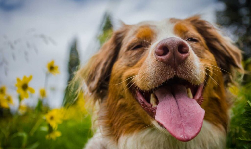 cane felice in asilo