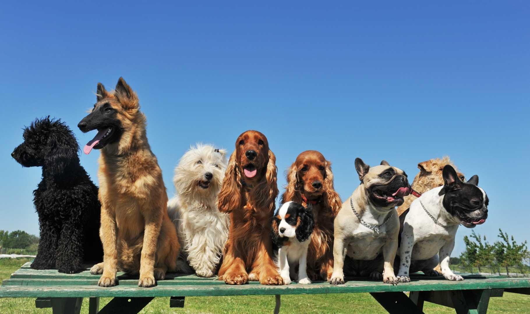 cani insieme