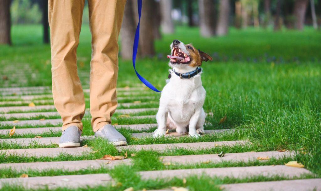 quanto gaudagna un dog sitter