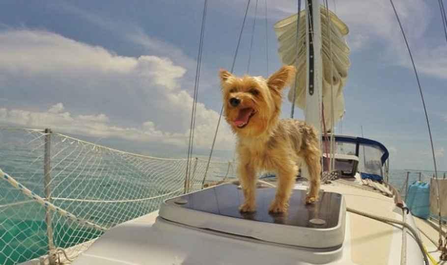 vacanze in catamarano con il cane