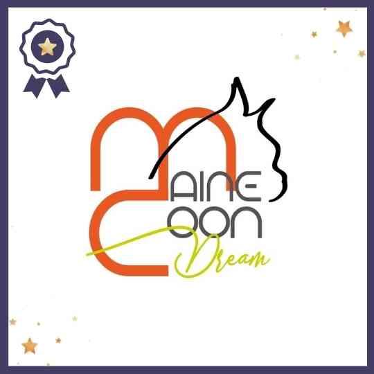 main_coon_dream_milano