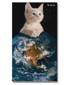 fotoquadro gatto rosso
