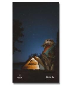 gatto in campeggio foto